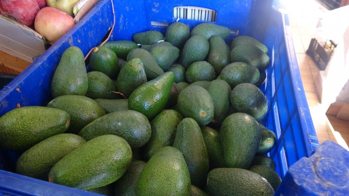 Mersin'de muzun yerini avokado aldı